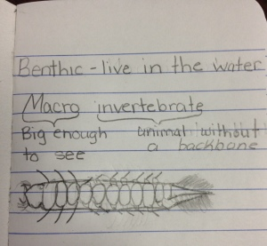 A student's guess at what a benthic macroinvertebrate looks like