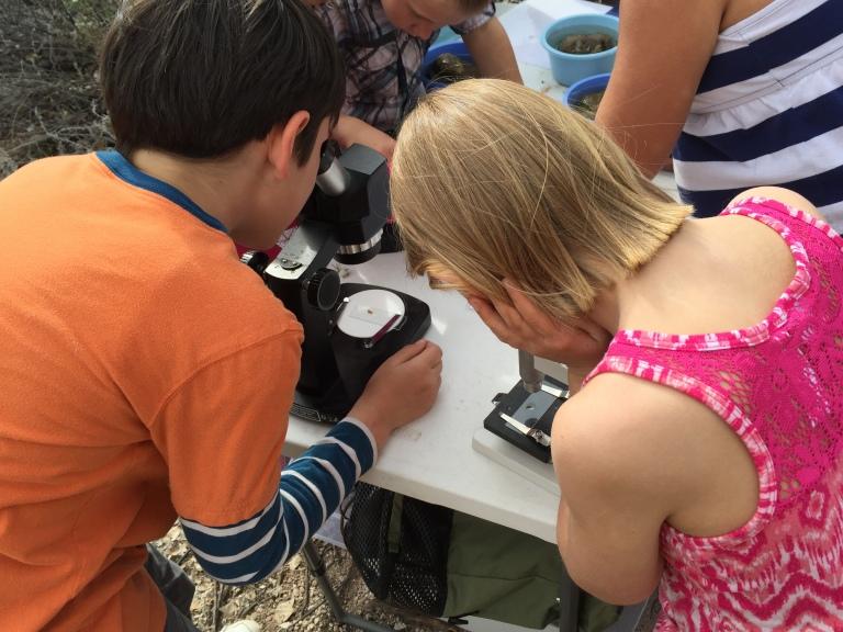 Students examine benthic macroinvertebrates under a microscope.
