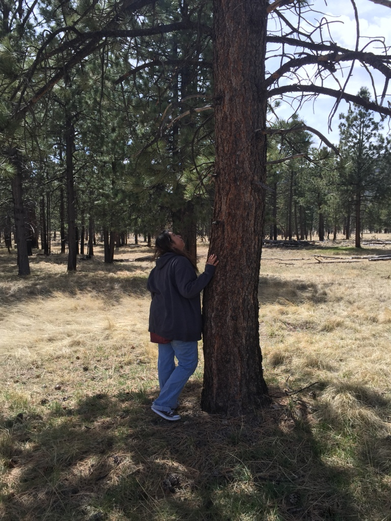 Taking a closer look at the bark of the ponderosa.