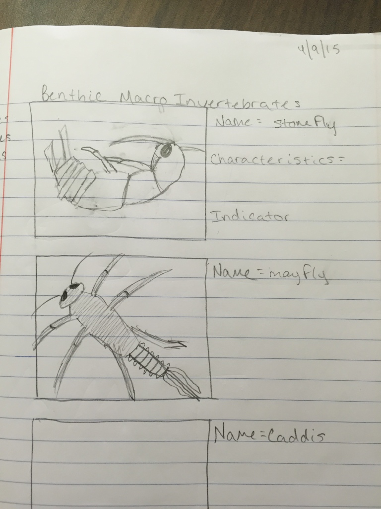 One student's drawing of their benthic macroinvertebrates.